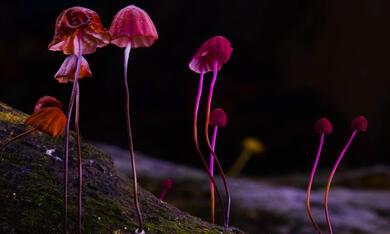 Fantastische Pilze - Die magische Welt zu unseren Füssen  - Bild 4