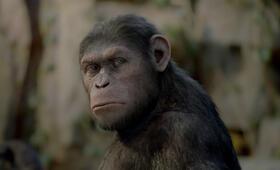 Planet der Affen: Prevolution - Bild 13