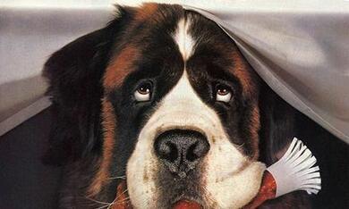 Ein Hund namens Beethoven - Bild 1