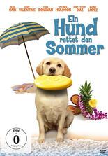 Ein Hund rettet den Sommer