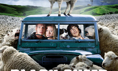 Black Sheep - Bild 7
