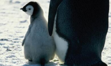 Die Reise der Pinguine - Bild 7