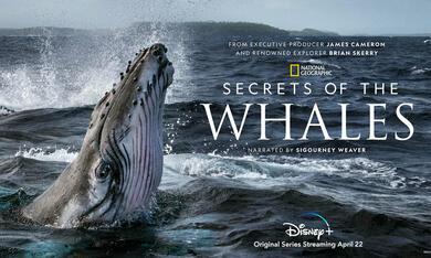 Die geheimnisvolle Welt der Wale, Die geheimnisvolle Welt der Wale - Staffel 1 - Bild 3