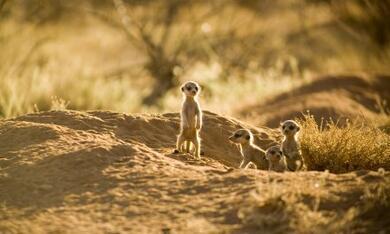 Wächter der Wüste - Bild 8