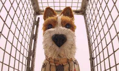 Isle of Dogs - Ataris Reise - Bild 9