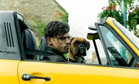 Immer Drama um Tamara  mit Dominic Cooper - Bild 71