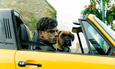 Immer Drama um Tamara  mit Dominic Cooper - Bild 4