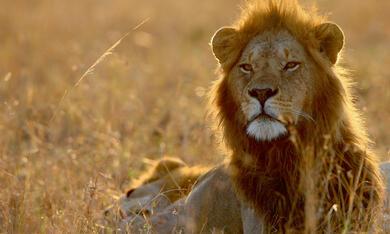 Serengeti - Bild 6