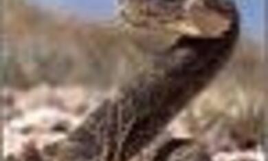 Die Wüste lebt - Bild 6