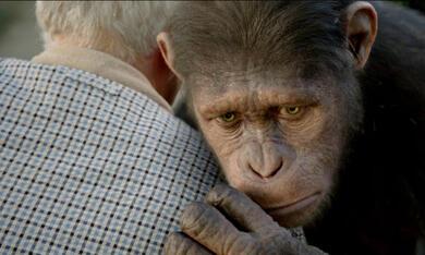 Planet der Affen: Prevolution - Bild 3