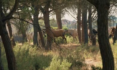Magie der Wildpferde - Bild 7