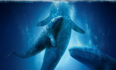 Der Ruf der Wale - Bild 8