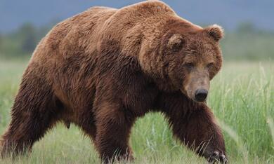 Bären - Bild 5