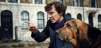 Bild zu:  Benedict Cumberbatch als Sherlock Holmes