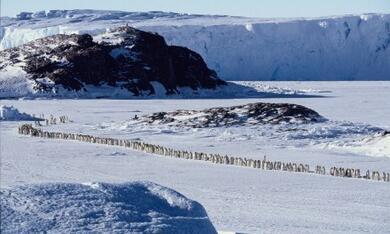 Die Reise der Pinguine - Bild 1