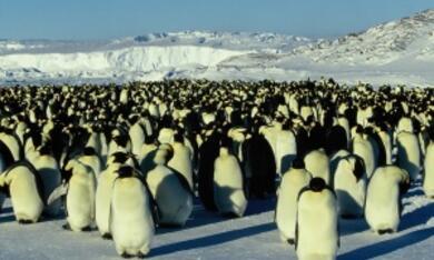 Die Reise der Pinguine - Bild 9
