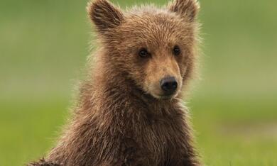 Bären - Bild 6