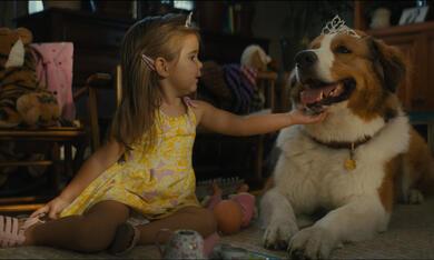 Bailey - Ein Hund kehrt zurück mit Emma Volk - Bild 1