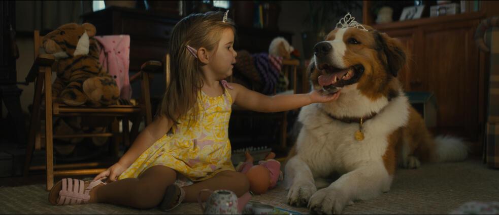 Bailey - Ein Hund kehrt zurück mit Emma Volk