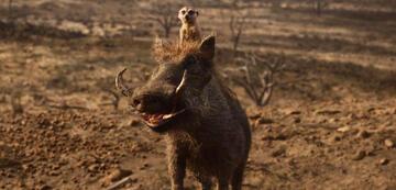 Timon und Pumbaa im König der Löwen-Remake
