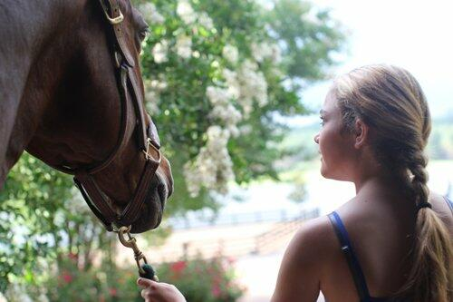 Horse Farm Spiel Tipps