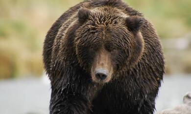 Der Bär in mir - Bild 5