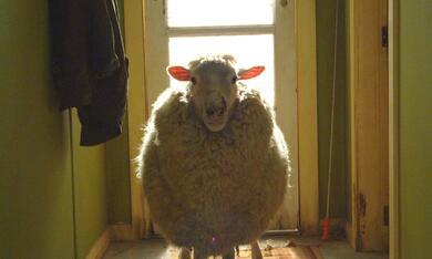 Black Sheep - Bild 6