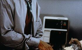 Dr. Dolittle mit Eddie Murphy - Bild 11