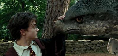 Harry und Seidenschnabel