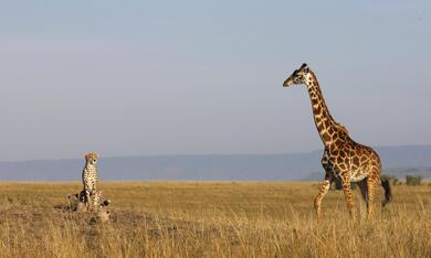 Serengeti - Bild 1