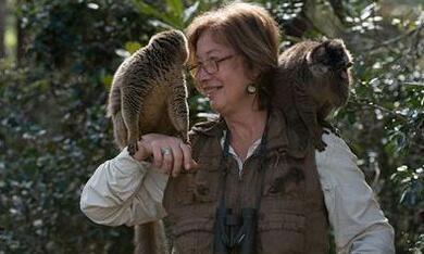 Island of Lemurs: Madagascar - Bild 1