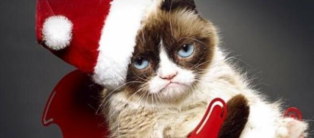Grumpy Cat mag Weihnachten nicht