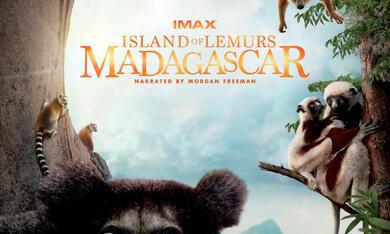 Island of Lemurs: Madagascar - Bild 4