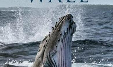 Die geheimnisvolle Welt der Wale, Die geheimnisvolle Welt der Wale - Staffel 1 - Bild 1