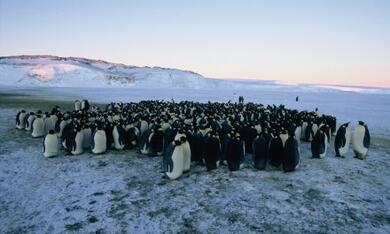 Die Reise der Pinguine - Bild 12