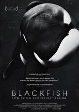 blackfish german stream
