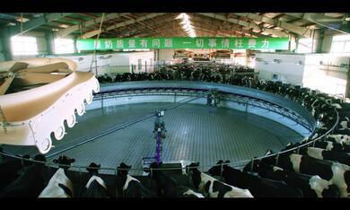 Das System Milch - Bild 2