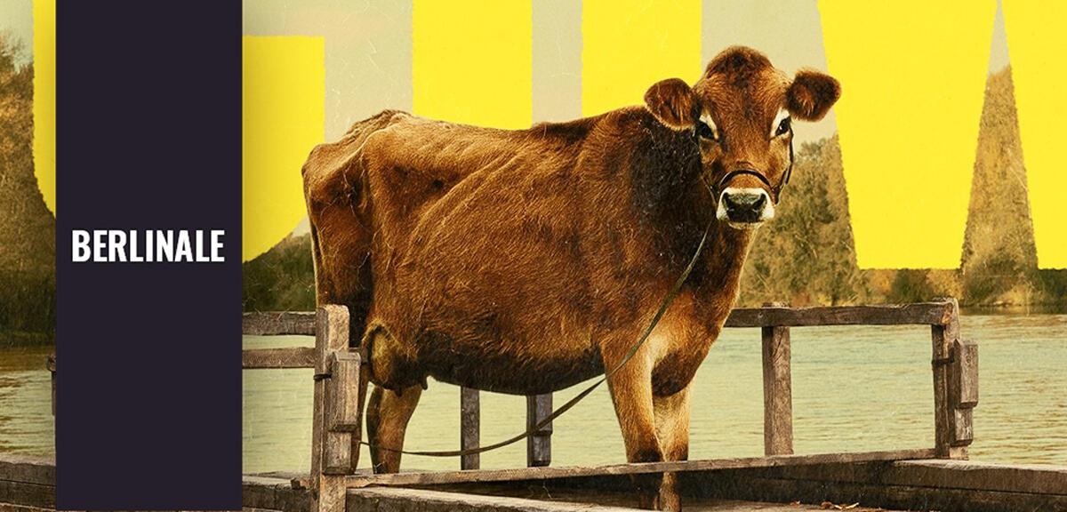 Zärtlicher Western: Der größte Star der Berlinale ist eine Kuh