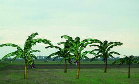 Von Bananenbäumen träumen - Bild 14
