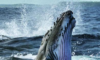 Die geheimnisvolle Welt der Wale, Die geheimnisvolle Welt der Wale - Staffel 1 - Bild 2