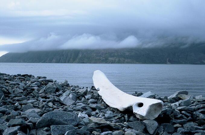 Chamissos Schatten: Kapitel 1 - Alaska und die aleutischen Inseln