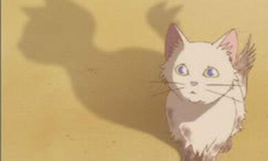 Das Königreich der Katzen - Bild 2