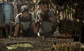 Maze Runner - Die Auserwählten im Labyrinth mit Dylan O'Brien und Ki Hong Lee - Bild 42