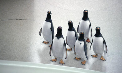 Mr. Poppers Pinguine - Bild 9