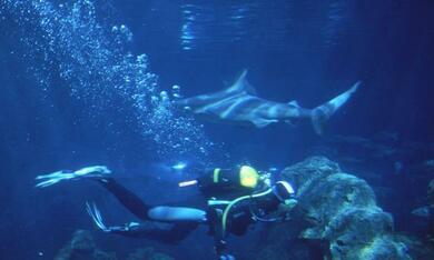 Hai-Alarm auf Mallorca - Bild 5
