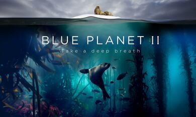 Blue Planet II - Bild 4