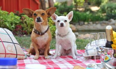 Beverly Hills Chihuahua 3 - Bild 3