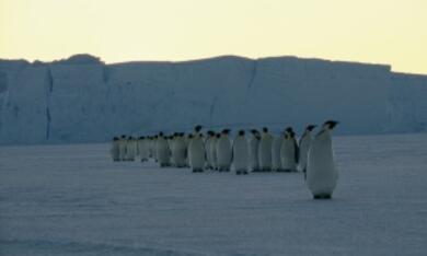 Die Reise der Pinguine - Bild 5