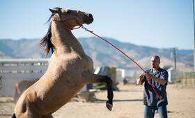 The Mustang  mit Matthias Schoenaerts - Bild 3