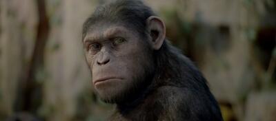 Auch Caesar wundert sich, wer ihn denn wohl durch den nächsten Film lotsen wird...